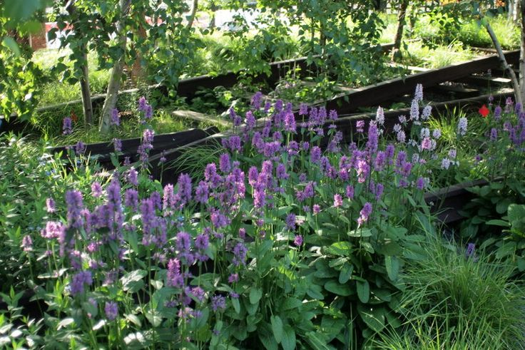 293 best images about piet oudolf high line new york on for Piet oudolf favorite plants