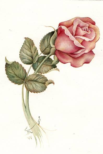 The Rose bud; 1998; watercolor & gauache on paper; belonging to Mrs. Samadi by Reza Mahdavi