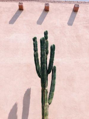 cactus + pink wall, southwestern /