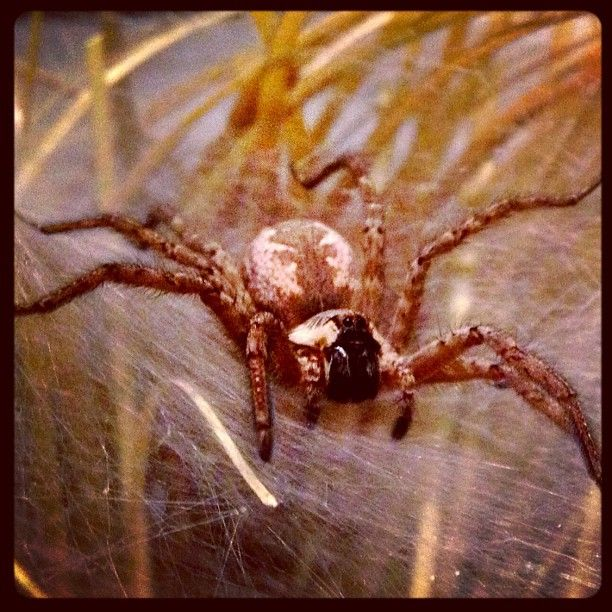 279 Best Images About Spiders On Pinterest
