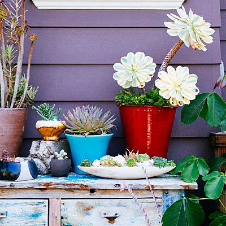 Succulent side-board Designer and co-owner of L.A.-based nursery Potted, Annette Gutierrez uses a weathered wood sideboard to display a collection of potted plants, such as 'Sunburst' aeonium with sedum (in red pot) and a tiny succulent landscape in a low white bowl.