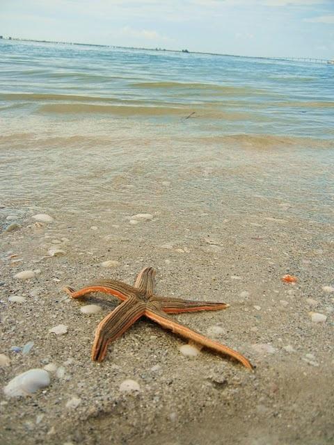 {BLOGGED}: Favorite island Sanibel, Florida. #Starfish