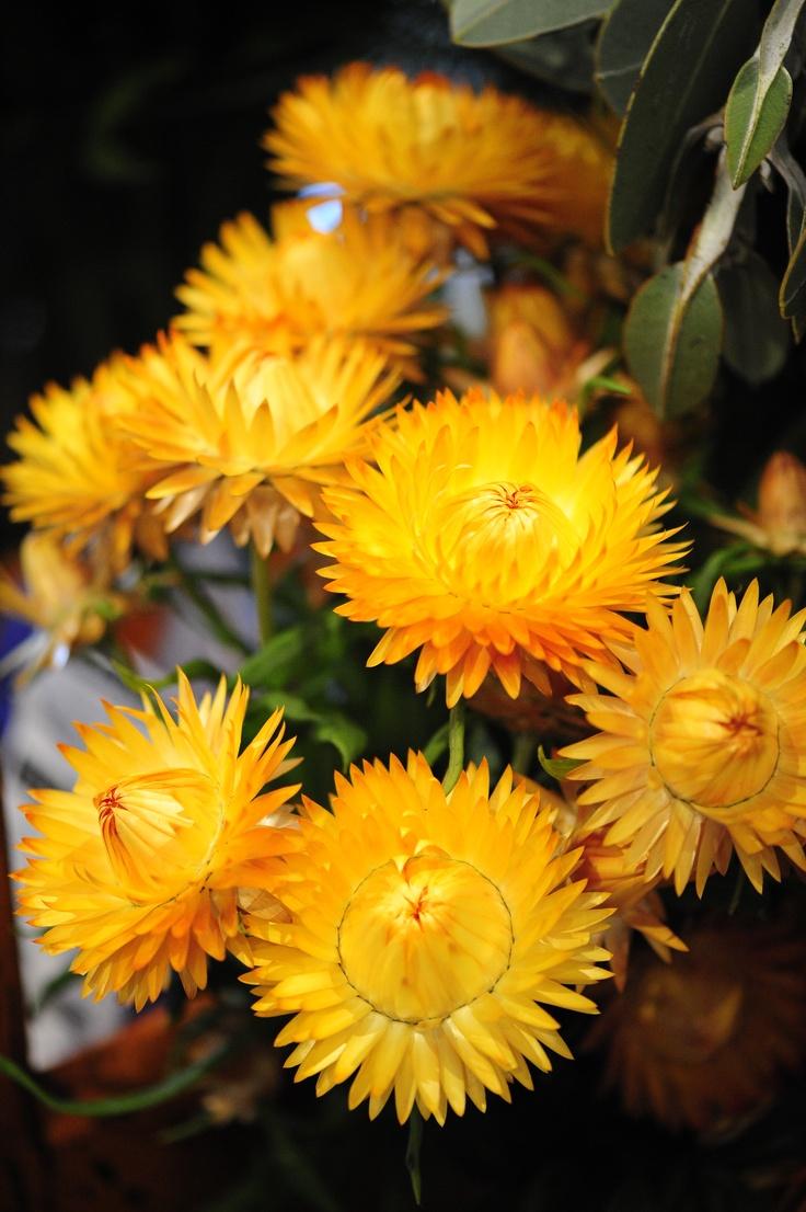 Craigslist Flower Mound Furniture: Flower Shops In Spring ...