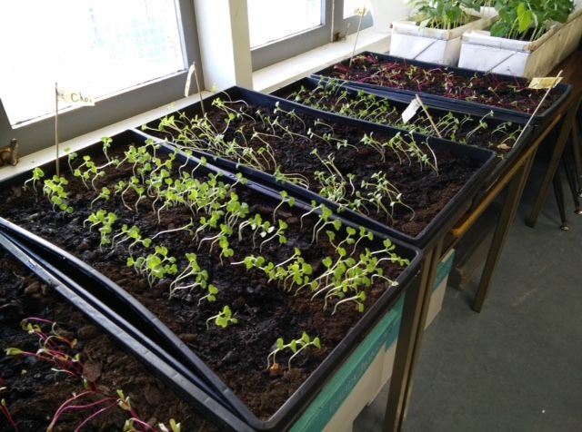Teaching children how to grow their own vegetables | Growing Chefs | Pier 73 Restaurant, Executive Chef | Pacific Gateway Hotel YVR