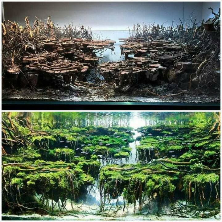 Forest Aquascape