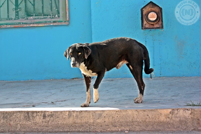 Dog in the street in Bonfil/Cancun Mexico