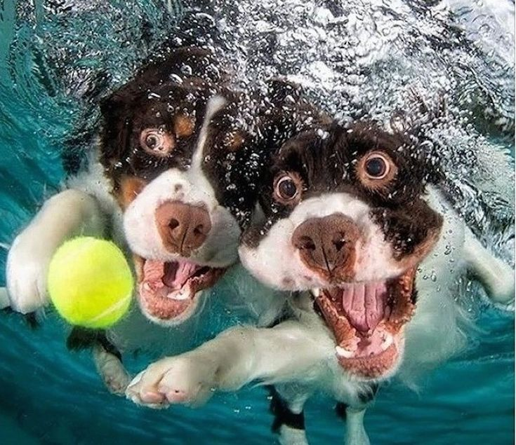Dogs Diving Underwater - Adorable