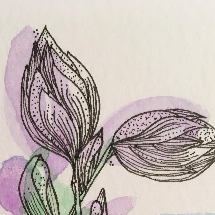 """Florals, hosta flowers drawing  Ali Lamontagne Illustration (@alilamontagneillustration) on Instagram: """"Detail from my Sunday morning garden study. My favourite thing about sitting quietly in my garden…"""""""