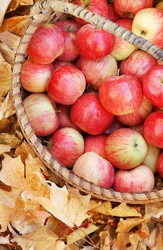 apples on a brisk autumn day