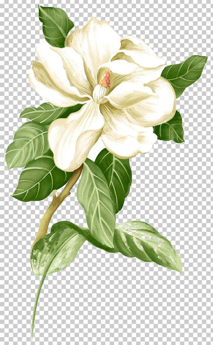 Painted White Jasmine Material Png Black White Branch Canvas Color Desktop Wallpaper Flower Png Images Vintage Flowers Wallpaper Coral Art Print
