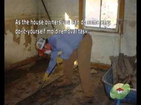 9 best asbestos abatement images on pinterest toxic mold mold mold removal contractor palm beach fl phone 1 800 578 7038 mold solutioingenieria