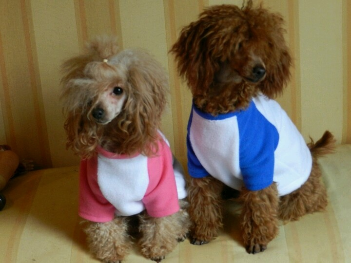 Polares calentitos para perritos frioleros #ropa #perros #mascotas . Más info en www.urbecom.com/puppy