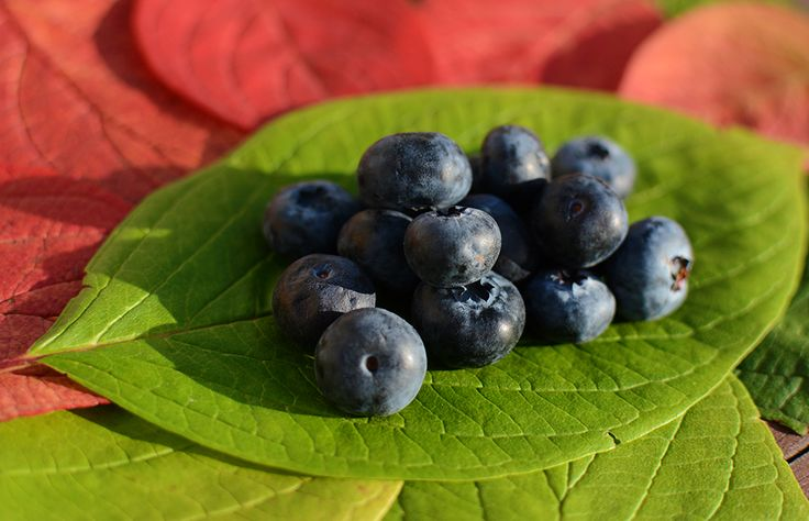 Scandinavian blueberries are perhaps the best in the world. A powerful antioxidant, and with a wide range of health benefits! Click the image to purchase the blueberry-supplement from Good For Me
