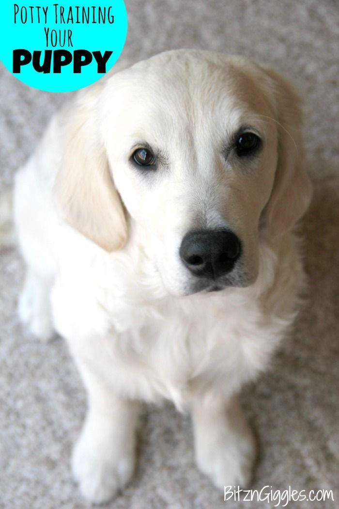 Potty Training Your Puppy Nudgethemback Training Your Puppy