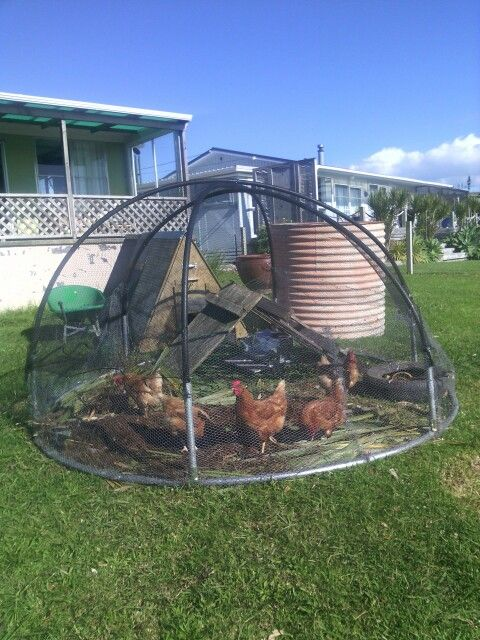 Storm proof Chicken Dome!