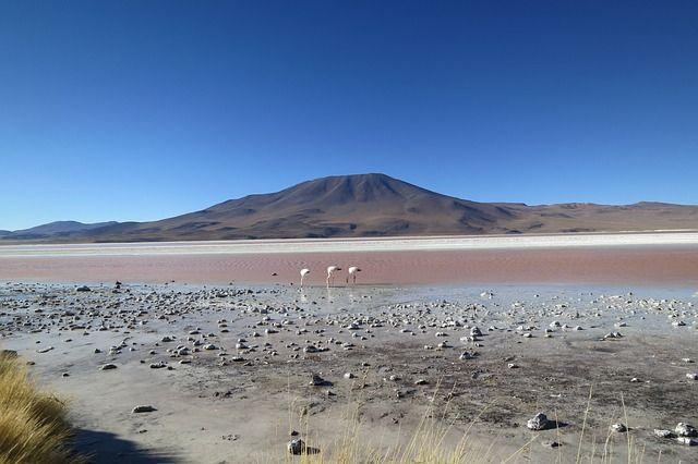 Chile Desert Flamingo - Best arid and desert experiences