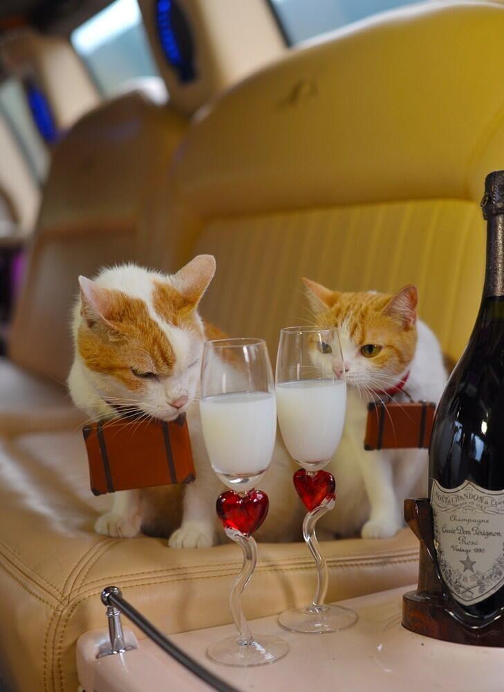 How sweet..the traveling kitties