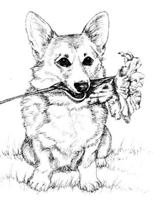 Pomeranian Puppy Realistic Cute Puppy Coloring Pages