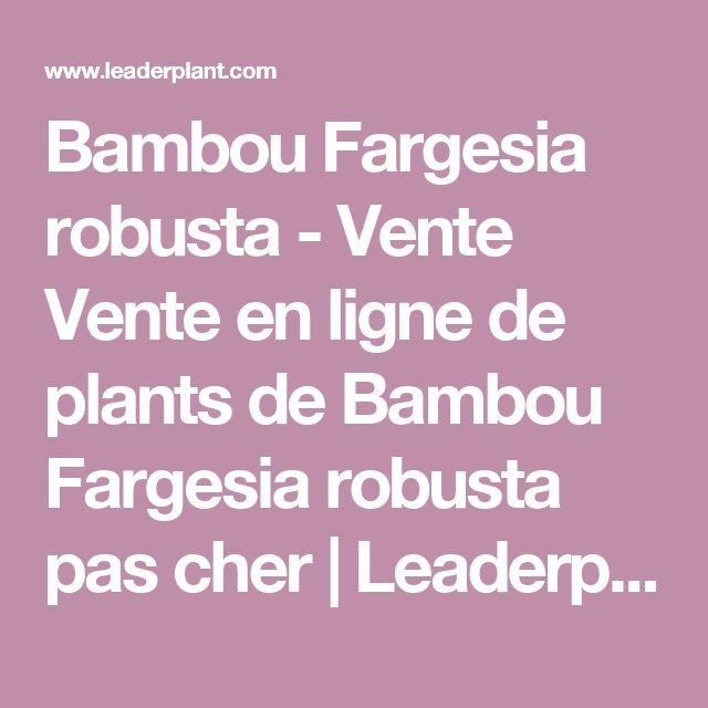Bambou Fargesia robusta - Vente Vente en ligne de plants de Bambou Fargesia robusta pas cher | Leaderplant