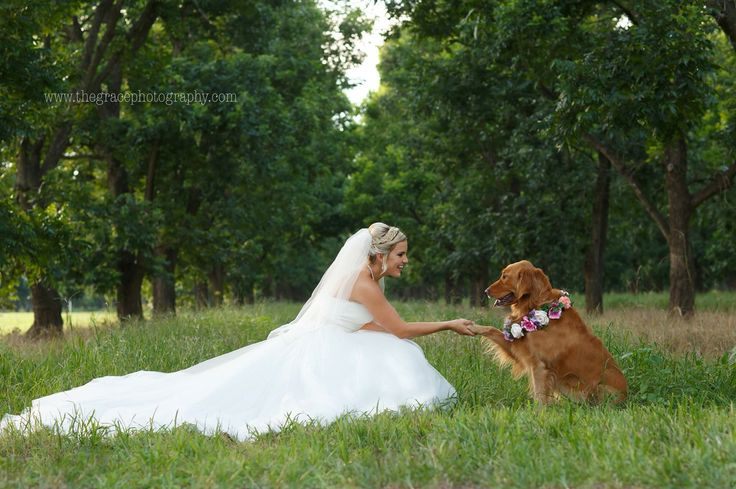 Wedding dog golden retriever country bridal pictures pics pecan trees beautiful dress photography wedding flowers hand shake puppy adorable beautiful bride green Texas wedding shabby chic veil hair trees love