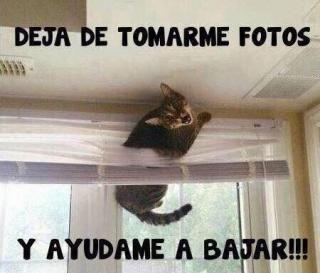 Gatos atrapados