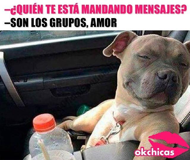 Juan Mecanico Perros Frases Perros Lindos Perros Peligrosos