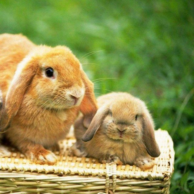 bunny — Feeling Apathetic #Shuttersong