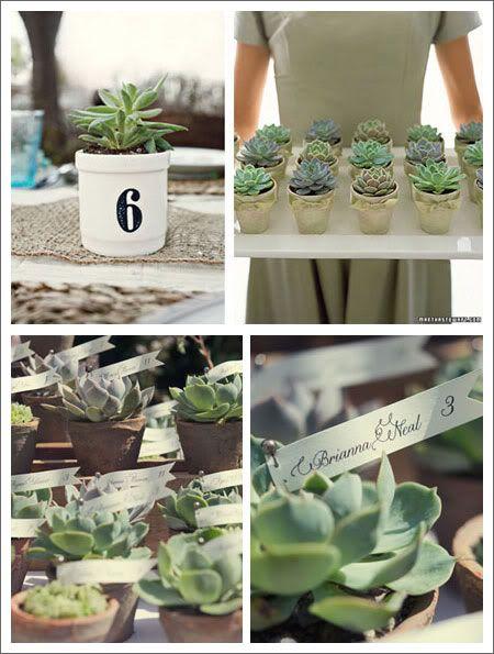 Photo detalles boda varie creazioni pinterest plantas boda y arreglos - Plantas pequenas para regalar boda ...