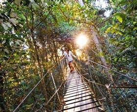 Tree Top Walkway: O'Reilly's Tree Top Walk allows you to walk through a canopy of flowering and fruiting trees covered by vines whilst you explore the epiphytic orchids and ferns surrounded by the many birds and animals that inhabit the tree tops.   The Tree Top...