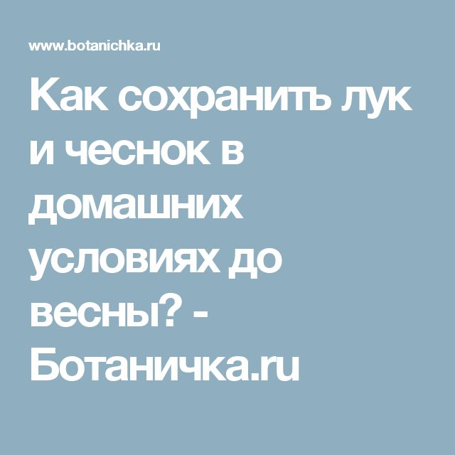 Как сохранить лук и чеснок в домашних условиях до весны? - Ботаничка.ru