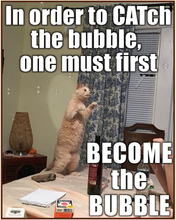 Best 25+ Cat memes ideas on Pinterest | Funny cat memes ... - photo#11