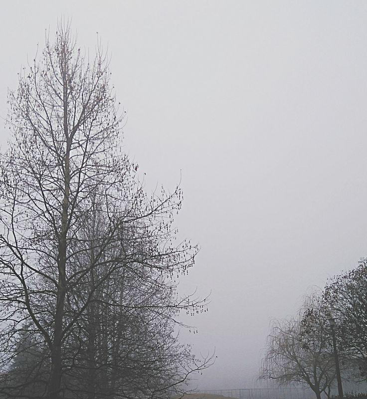 Foggy morning :)