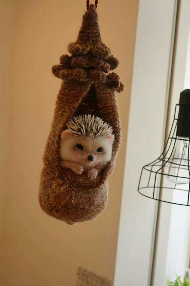 "Dangling Hedgehog at the Hedgehog Cafe ""Harinezumi Tsuntsun"""