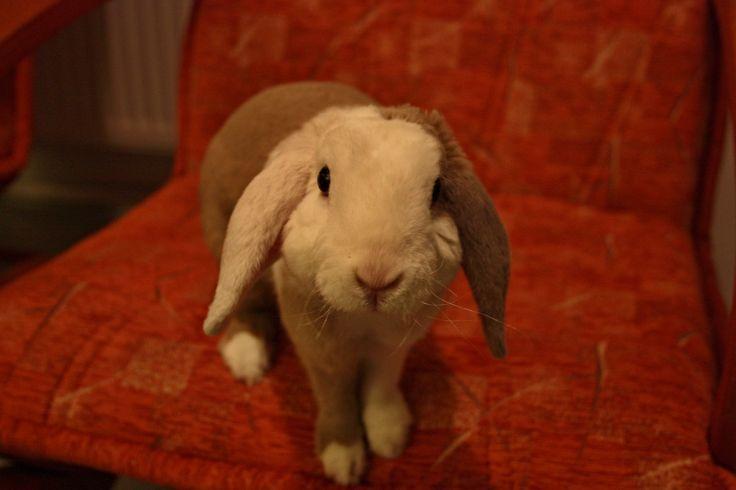 My  cute baby bunny <3
