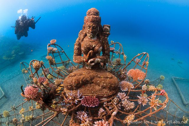 The Coral Goddess, Bio-Rock Pemuteran Bali Indonesia.