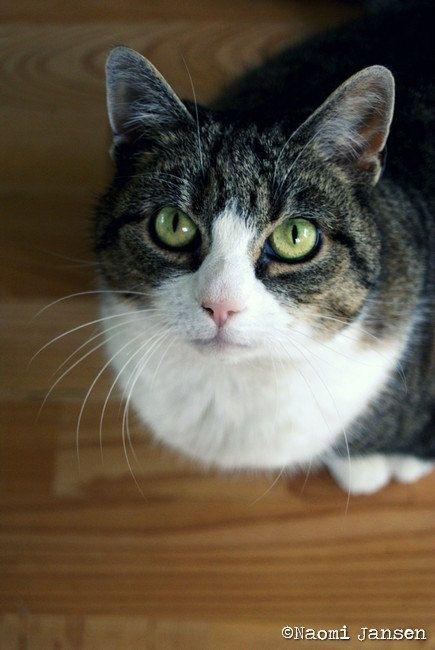 Looking up cat photography. soft tones door theimperfectartistNL