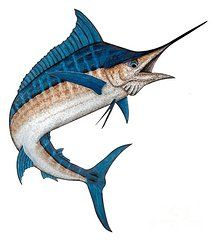Blue Marlin Drawings - Metal Marlin Realistic by Carol Lynne