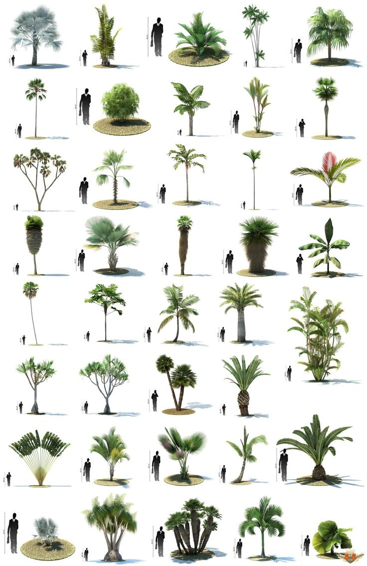 Top view plants 02 2d plant entourage for architecture - 1328782546_designcrown Com_10 10 06 01 3d Models Jpg Tree Designslandscape Architectureoutdoor Palm Plantspalm
