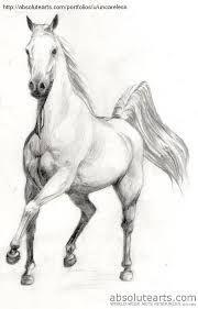 Resultado de imagen para dibujos a lapiz de animales