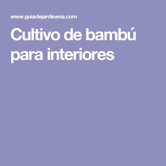 Cultivo de bambú para interiores