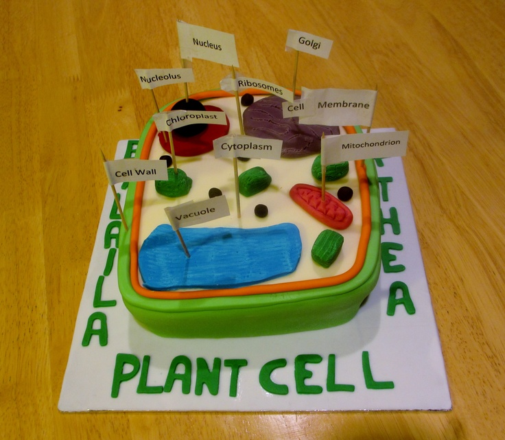 Plant cell.  Biology homework.