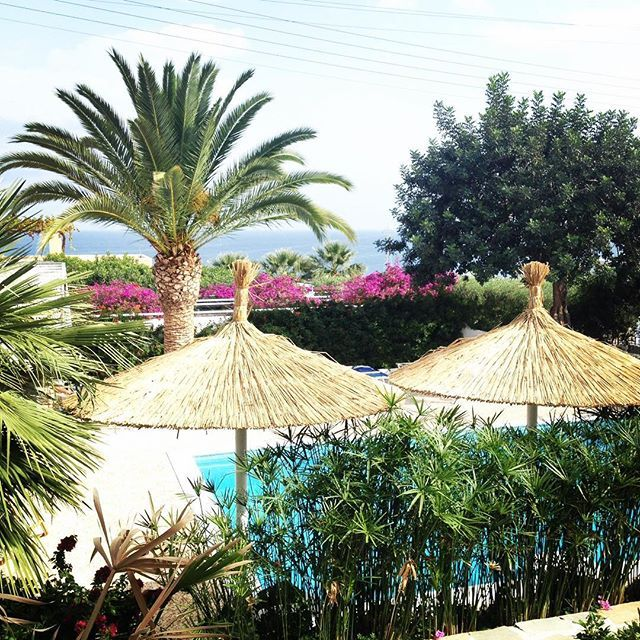 Palm tree paradise 🌴🌴 #villaippocampi #ippocampi #hotel #hotels #boutiquehotel #smallhotel #greekhotel #exclusivehotel #greece #crete #summer #travel #traveling #palm #palmtree #palmtrees