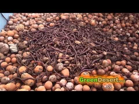 How to make your aquaponics explode. - YouTube