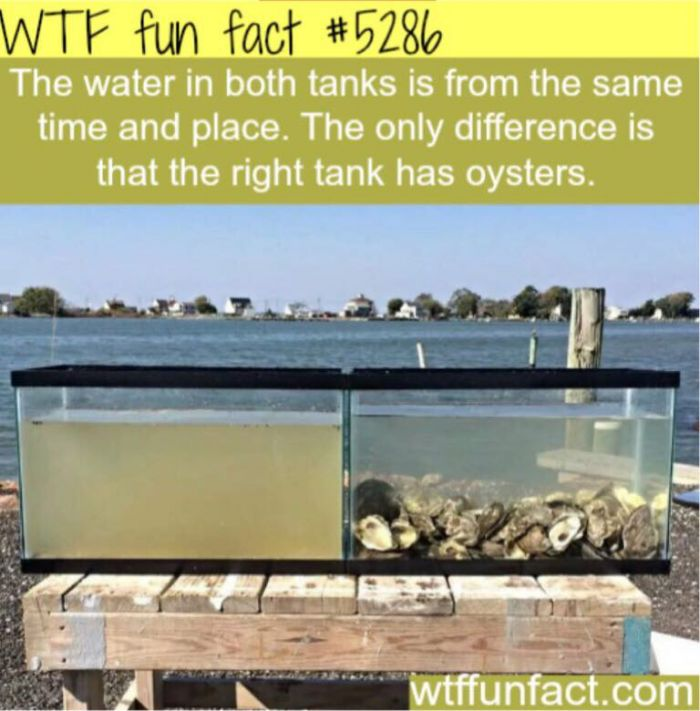Why filter  feeders are so important