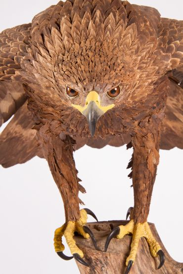 Golden Eagle Sculpture by Sheffield sculptor and wood carver David Frisby