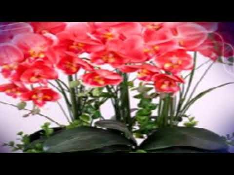 Поливая так, орхидея зацветет за 10 дней #mosshow - YouTube