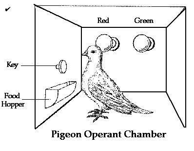Way of Intervening: B.F. Skinner's Pigeon Experiment