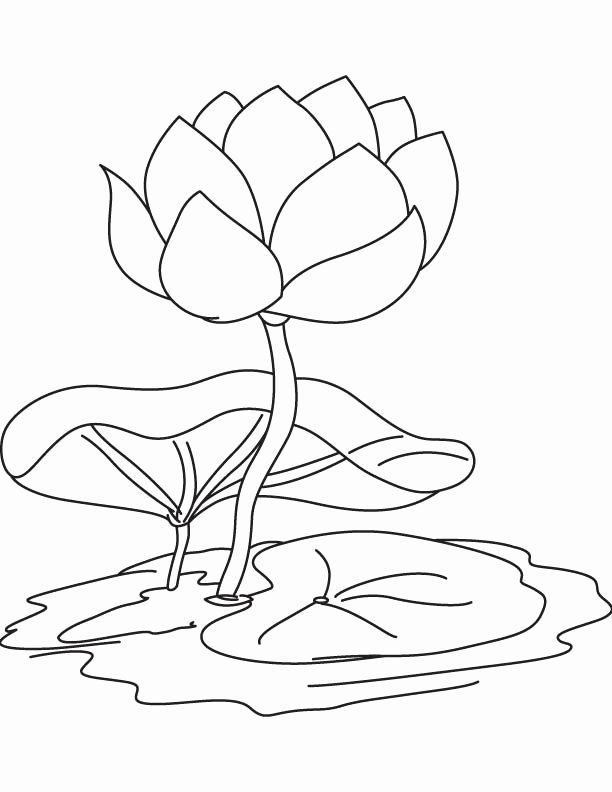 Lily Pad Coloring Page Lily Pads Coloring Pages Lily