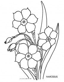 narcissus  embroidery pattern