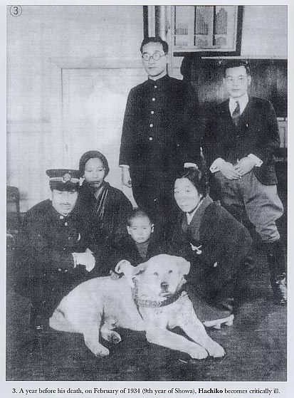 61 best images about hachiko a dog s tale on pinterest